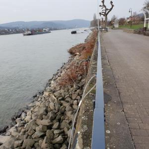 Braubacher Rheinanlagen b42